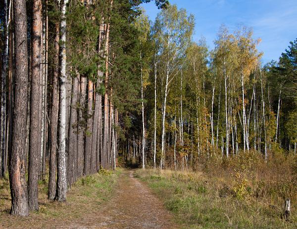 Осенняя пора - Авторское фото - Zen Designer: http://zen-designer.ru/photo-bank/99-zolotaya-osen