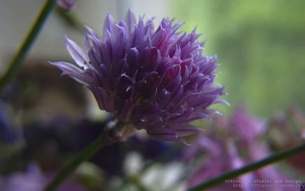 Картинки летние полевые цветы скачать